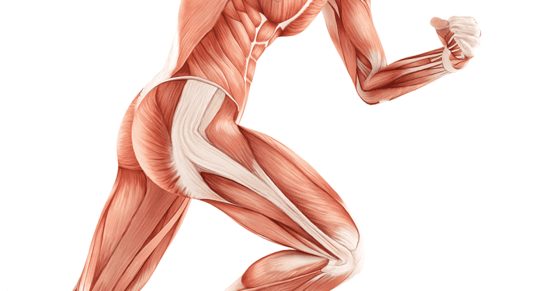 You Don\'t Just Want Glutes, You Need Glutes | BOXROX