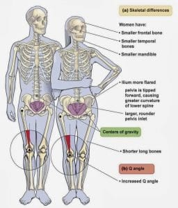 male to female skeletal differences