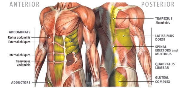medical diagram of core strength muscles