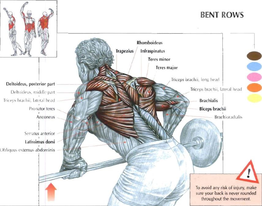 barbell row muscles worked by the exercises