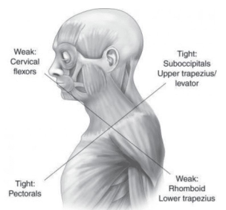 posture human anatomy