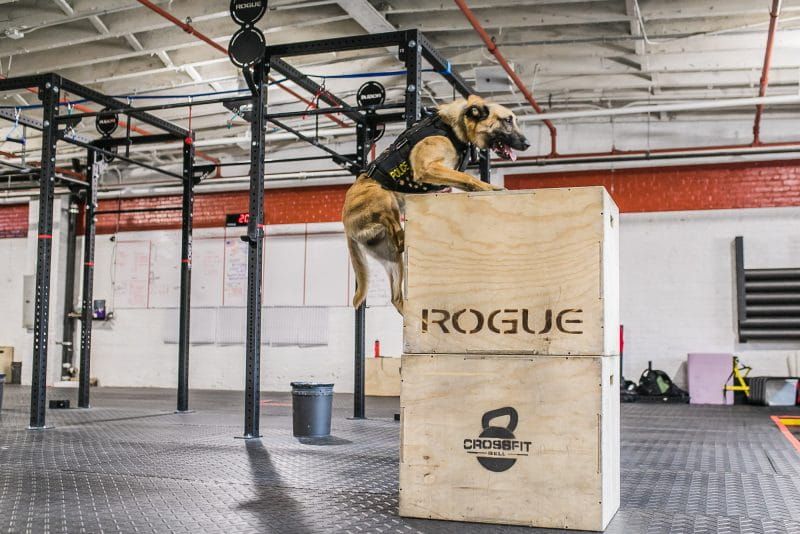 8 CrossFit Workouts to Celebrate K-9 Veterans Day