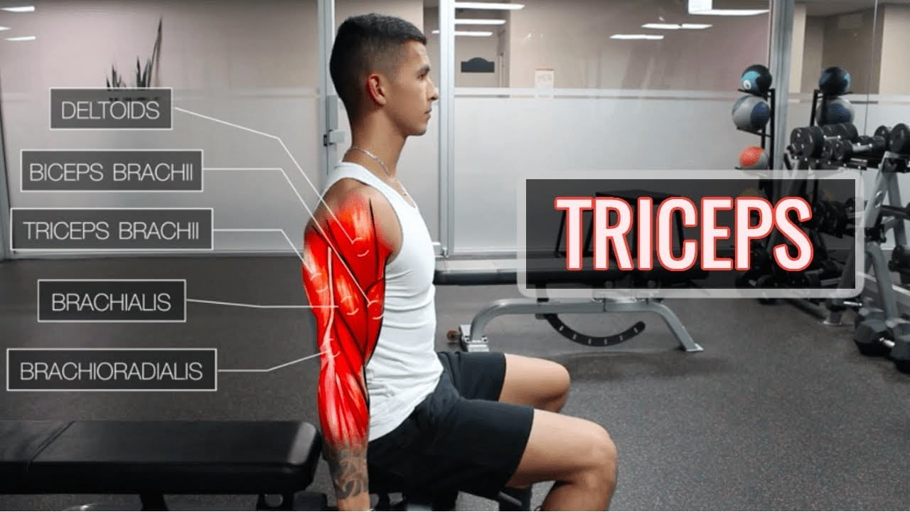 Triceps Workouts at Home