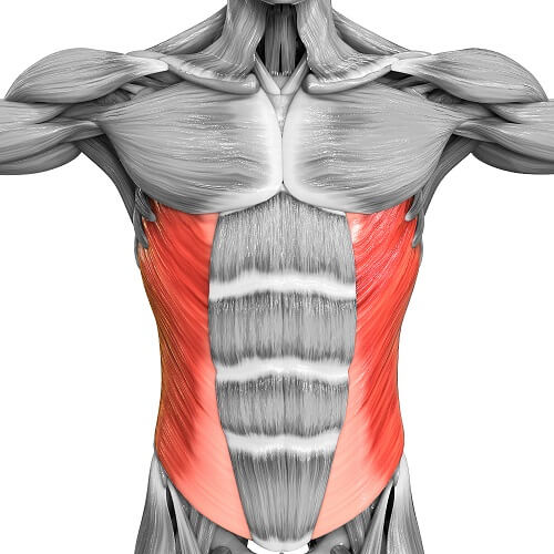 Everything you Need to Know about The Oblique Muscle Groups | BOXROX